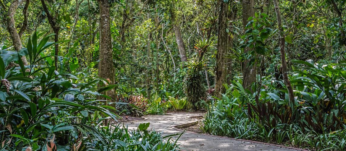 Jard n bot nico lankester for Jardin botanico tarifas